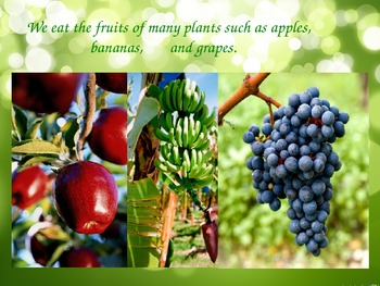 Why We Need Plants! PowerPoint