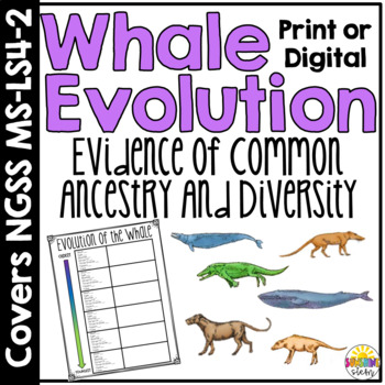 Why are Whales Mammals?