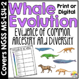Whale Evolution Lesson and Activity: Evidence of Common Ancestry and Diversity