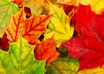 Reading in the Content Areas: Why leaves turn color reading