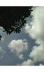 Wikwik Greet Baligator