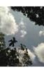 Wikwik Greet Cattle