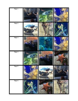 Wil's Trip to the Aquarium Adapted Book Lvl 1 (matching)