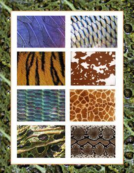 Zoo Animal Font Clip Art