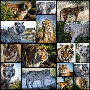 Wild Animal Photographs For the Classroom and Commercial Use  - A Growing Bundle