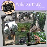 Wild Animal photos