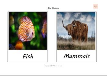 Wild Animals 3 part cards