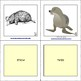 Wild Animals - Flashcards - 40 animals!!! Growing Freebie!