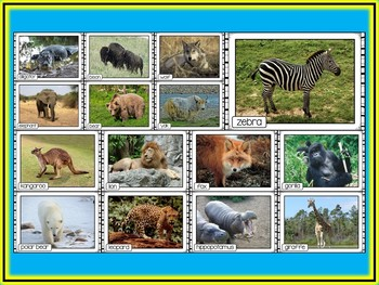 Wild Animals Photo Poster Display Pack