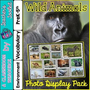 Wild Animals Photo Poster Display Pack {UK Teaching Resource}