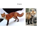 Wild Animals Powerpoint with Pictures