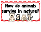 Wild Animals- Supplemental Activities for Wonders Unit 4 Week 3