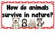 Wild Animals- Supplemental Activities for Wonders Unit 4 Week 3