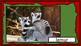 Wild Animals of Africa Flashcards