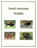 North American Wildlife - Activities, Handouts and Worksheets