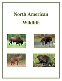 North American Wildlife - Activities, Handouts and Worksheets