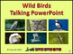 Wild Birds Talking PowerPoint & Four Puzzle Pack