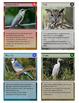 Wild Birds Trading Cards