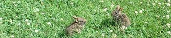 Photo Products - Wild Bunnies Theme