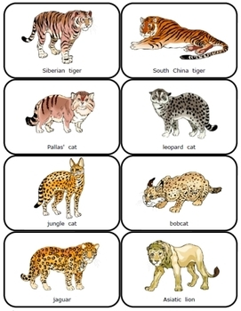 Wild Cat War:  comparing decimals