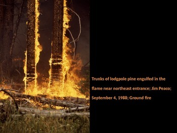 Wild Fires out of Control PowerPoint - Read 180 Stage A