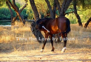 Wild Horse Stock Photo #191 and #192