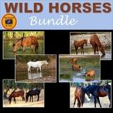 Wild Horses Bundle