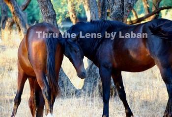 Wild Horses Stock Photo #123