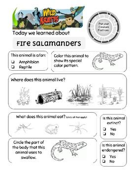 Wild Kratts Fire Salamanders
