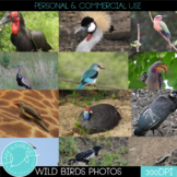 Wild Life Photos of Birds for Commercial Use