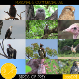 Wild Life Photos of Birds of Prey for Commercial Use