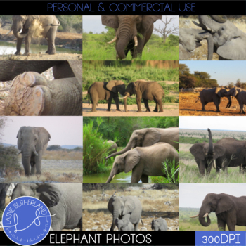 Wild Life Photos of Elephants for Commercial Use