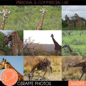 Wild Life Photos of Giraffe for Commercial Use