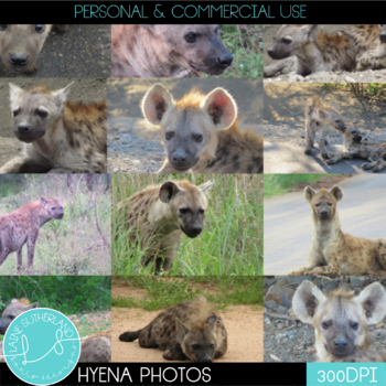 Wild Life Photos of Hyenas for Commercial Use