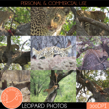 Wild Life Photos of Leopards for Commercial Use