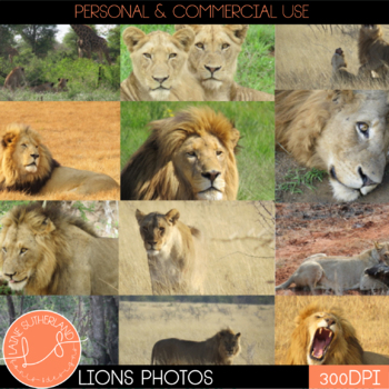 Wild Life Photos of Lions for Commercial Use