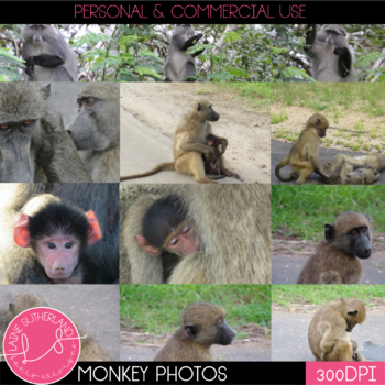 Wild Life Photos of Monkeys for Commercial Use