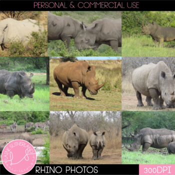 Wild Life Photos of Rhino for Commercial Use