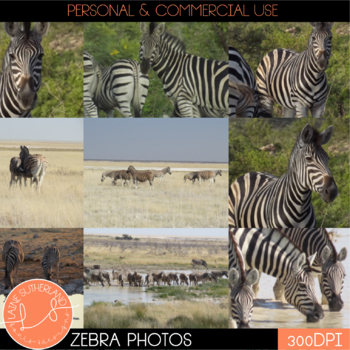 Wild Life Photos of Zebra for Commercial Use
