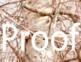 Wild Mushroom Stock Photos and ClipArt