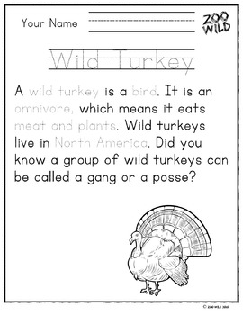 Wild Turkey -- 10 Resources -- Coloring Pages, Reading & Activities