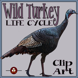 Turkey Life Cycle Clip Art