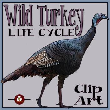 Turkey Life Cycle Clip Art