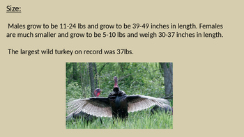 Wild Turkey - Power Point review facts information history pictures