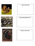 Wild Turkey Project Notes