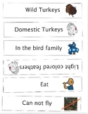 Wild Turkey and Domestic Turkey Venn Diagram