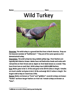 Wild Turkey - informational article lesson facts questions vocab word search