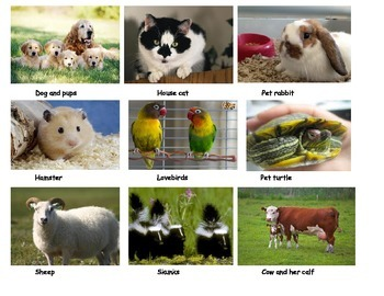 Wild or Domestic? Animal sort game and center