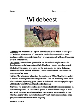 Wildebeest - informational article lesson facts questions vocabulary word search