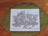 Wildflower Coloring sheet